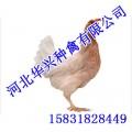 柴鸡,柴鸡价格,柴鸡厂家,华兴种禽