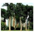 想找【江苏槠树|供应槠树|无锡槠树】就找无锡市国农化肥