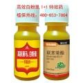 ?#38381;?#28201;室白粉虱特效药 专杀白粉虱杀虫剂 高效打白粉虱最好的药
