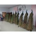 鞣制動物皮毛、熟動物皮毛、動物皮毛加工技術培訓--山東如生標