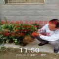红颜草莓苗哪里有 草莓苗红颜厂家 泰安开发区鸿强园艺场