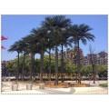 高仿真大王椰,酒店大堂裝飾樹,大型仿真大王椰