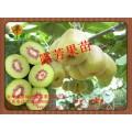 红阳猕猴桃苗供应商