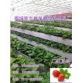 草莓立体式种植槽厂家|草莓立体种植槽|种植槽架