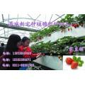 草莓种植槽 草莓基质滴灌种植技术
