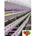 草莓栽培槽 草莓无土栽培槽 草莓无土栽培设备