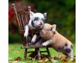 猪肉价格遇上牛市 白条猪批发价同比上涨60.17%