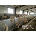 塑料羊床厂家 羊用漏缝板漏粪板图片