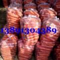 陜西大荔萬畝紅蘿卜產地批發大量上市