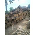 大批量供应大直径国槐木原木