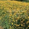 優質綠化花卉廠家-沭陽苗木商會