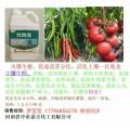 黄瓜强效生根壮苗剂 番茄生根壮苗特效药 豆角生根壮苗最好药