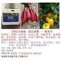 番茄高抗性重茬特效药 防治青枯病枯黄萎病根腐病重茬病害