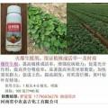 草莓育苗用什么药好 红薯育苗的好药 幼苗长势不好就用及时雨