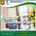 品牌连锁蓝莓叶黄素酯压片糖果OEM工厂