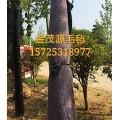济南金茂源厂家供应果树包裹毡绿化防寒保温毛毡