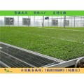 汉明厂家供应 网片 热镀锌网片 温室蔬菜床 不褪色