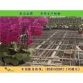 长期供应全自动苗床  杭州花卉农用移动苗床网  保质保量