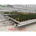 杭州自动苗床物流系统 温室育苗床生产商 品牌厂家