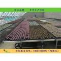 漢明移動苗床加工 移動苗床特點 各種苗床資材銷售