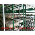 蘑菇架加工尺寸-組合式蘑菇架-食用菌架批發