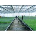 温室育苗 温室种植使用移动苗床的好处