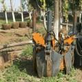 山东80土球移树机厂家 林业工程四瓣式CQM挖树机 起苗机