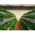 草莓立體栽培槽種植槽高架育苗槽一畝成本大概需要多少