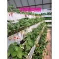 河北基質栽培槽 草莓種植槽支架—華耀現貨供應