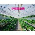 山東大棚草莓立體種植槽,質高價優