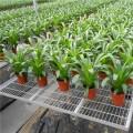 河北華耀溫室種植移動苗床的作用