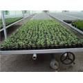 溫室花卉苗床設施方案及技術指導