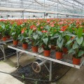 湖北生产制作温室移动苗床 蔬菜育苗床系统
