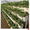 北京常年供应草莓专用立体种植槽