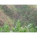 邊坡防護網價格