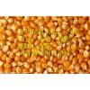 求購玉米高粱蕎麥棉粕