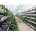 江苏省A字架草莓栽培专用种植设备现货批发