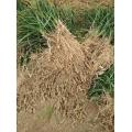 麦冬的作用和功效