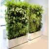 植物屏风价格