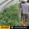 大棚膜分光生态农用PO大棚聚能膜保证三年内有长寿流滴消雾功能