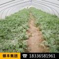 厂家拿样定做农用温室大棚膜长寿流滴消雾膜除草黑地膜蔬果专用膜