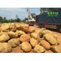 造景石材 鱼池围边 假山制作 大量黄蜡石吨位广东供应