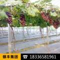 蔬菜温室大棚膜滴水的原因及解决方法