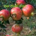 批发4公分5公分6公分石榴树苗价格