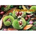 山东板栗树苗价格- 1-3公分丰产泰山板栗规格齐全0