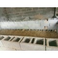 山西刺猬養殖場 現在刺猬多少錢一只