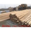 菏泽建筑木方价格厂家报价批发市场支模方木哪里卖0