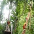 丛林穿越设备设计安装