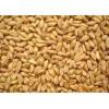 求购小麦高粱大米玉米等