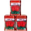 河南辣椒種子供應